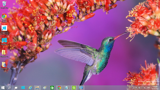 Beautiful Birds theme for Windows